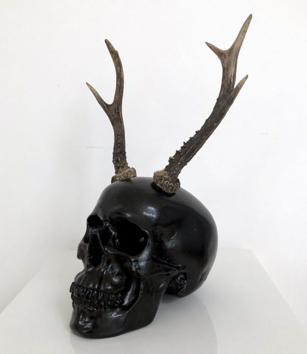 Antler Skull by Haus of Skulls